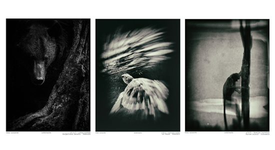 fotografies de l'exposició de Toni Arnaste