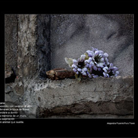 Exposició 'Foto.text - Text.foto'