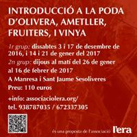 Curs 'Introducció a la poda d'olivera, ametller, fruiters i vinya'