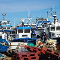 Visita comentada a la llotja de peix