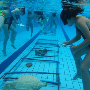 Arqueòlegs subaquàtics, la Draga