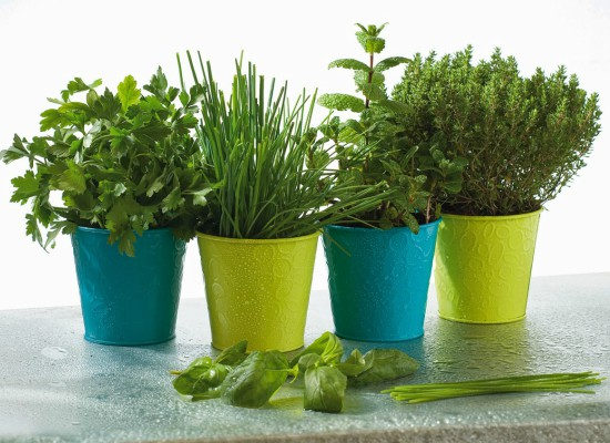 Taller de jardineria: les plantes i l'aigua