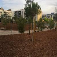 Bosc urbà