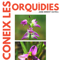 Coneix les orquídies - GEPEC