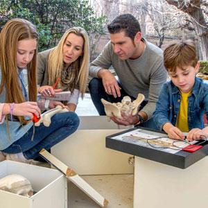 Activitat, Familiar, CSI, Necròpolis Paleocristiana, Tots Sants, Tàrraco, Museu Nacional Arqueològic de Tarragona, Tarragona, Camp de Tarragona, 2018