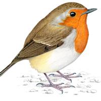 Il·lustració d'aus