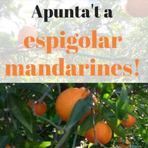 Espigolada de mandarines - Espigoladors