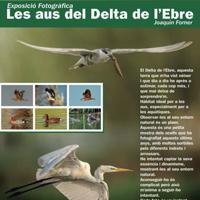 Exposició 'Les aus del Delta' de Joaquín Forner