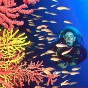 Fotografies subaquàtiques