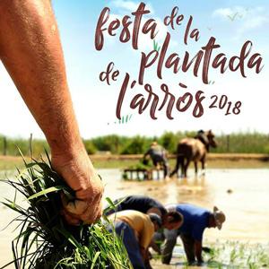 Festa de la Plantada de l'arròs - Amposta 2018