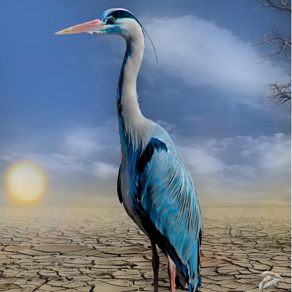 Muntatge fotogràfic sobre el canvi climàtic i la biodiversitat