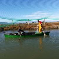 La pesquera de la tancada