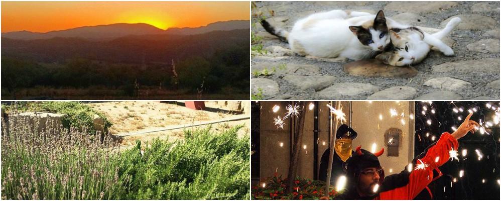 instagram, fotografies, #surtdecasaponent, agost, estiu, Surtdecasa Ponent