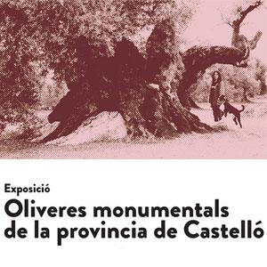 Exposició 'Oliveres monumentals de la província de Castelló' - Ulldecona 2018