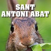 Sant Antoni - Santa Bàrbara 2017