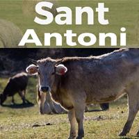 Sant Antoni - Vallfosca 2018