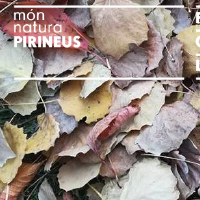 MónNatura Pirineus fa diverses propostes de tardor