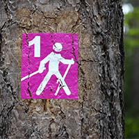 El nordic walking és una bona manera de caminar per la natura