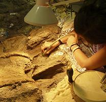 Moment de les tasques de restauració del coll de Titanosaure