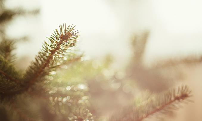 Un arbre un matí d'hivern