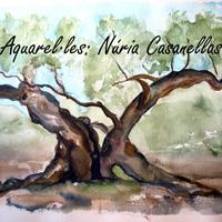 Exposició 'Un mar d'oliveres' de Núria Casanelles