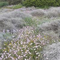 Imatge de flora de muntanya