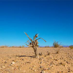 Crisi Climàtica, Arbre mort, Terra, Cel, desert