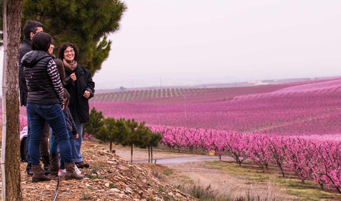 Floració Aitona