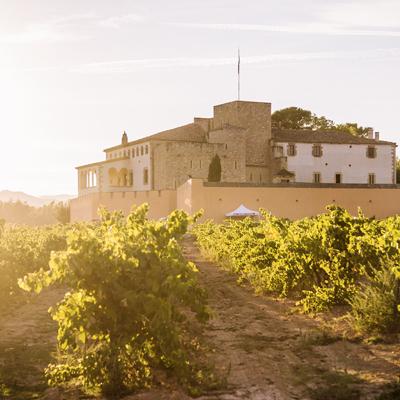 Celler i vinyes d'Oller del Mas