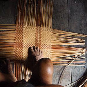 Cicle de xerrades 'Mirades Amazòniques del Segle XXI'