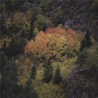 Imatge d'un bosc amb caducifolis