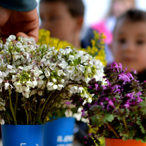 Activitat Familiar 'Cuinem amb herbes i flors espontànies de primavera' a càrrec d'Els Corremarges