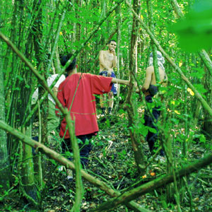 El Bosque (Parte II)