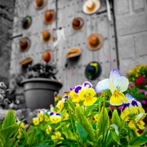 Exposició 'Les Garrigues en Flor'