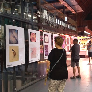 Exposició #FotoRecercaURV2019 a Tarragona, 2019