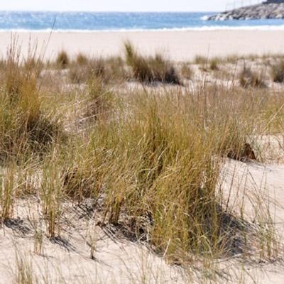 Exposició 'Les nostres dunes' a Cal Bofill, torredembarra, 2021