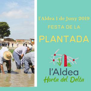 Festa de la Plantada - L'Aldea 2019