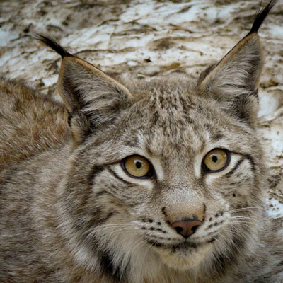 Fauna dels Pirineus, Monnnatura Pirineus