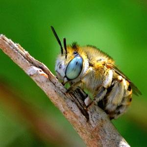Exposició 'Insectes i altres invertebrats. Els més petits de Montsant'