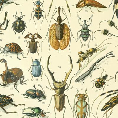 Taller familiar 'Descobrim els insectes'