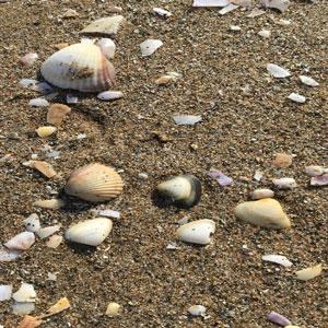 Sortida 'Lo Trabucador, una platja diferent' - MónNatura Delta de l'Ebre 2019