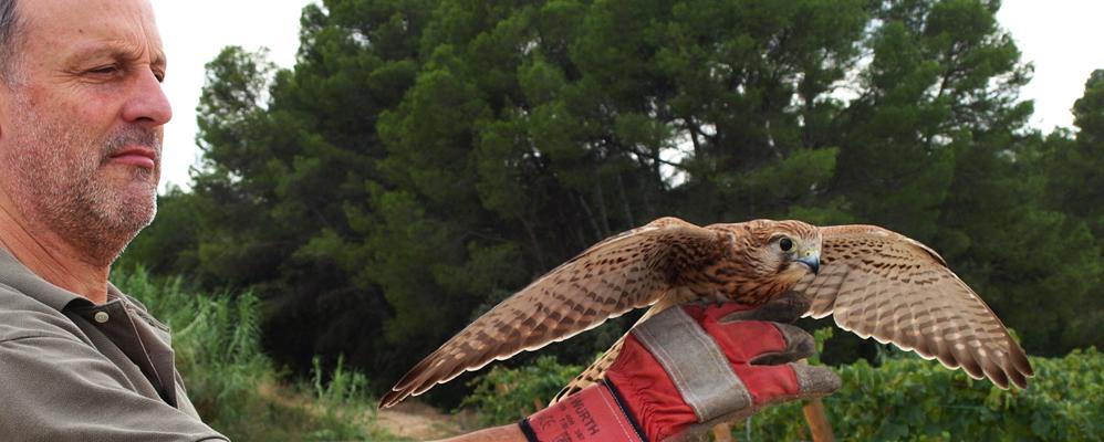 Xavier Bayer en un alliberament d'un ocell rapinyaire