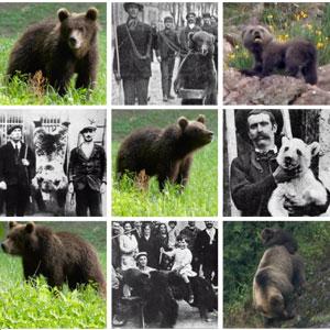 documental 'El retorno del oso' del realitzador de cinema de naturaDavid Perpiñán