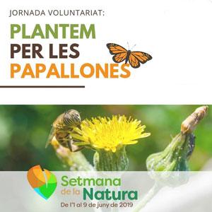 Jornada 'Plantem per les papallones' - Roquetes 2019