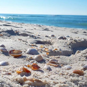 Taller d'observació 'La platja dels inútils'