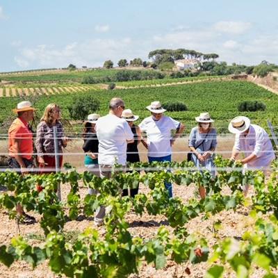 Passejada a la vinya de Rovellats