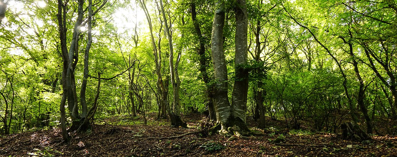 Bosc de tardor