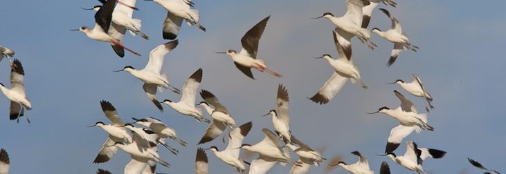 Sortida ornitològica - MónNatura Delta de l'Ebre