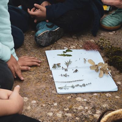 Activitat 'Petit herbari', Museu de la Vida Rural, 2021