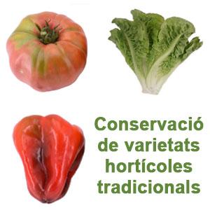 Jornada 'Conservació de varietats hortícoles tradicionals'